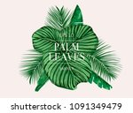 palm tree leaves background... | Shutterstock .eps vector #1091349479