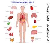human anatomy infographic... | Shutterstock .eps vector #1091359424