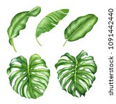 realistic tropical botanical... | Shutterstock . vector #1091442440