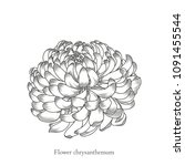 monochrome chrysanthemum flower ... | Shutterstock .eps vector #1091455544