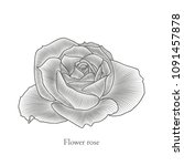 stylish cute hand drawn rose... | Shutterstock .eps vector #1091457878