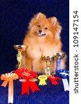 Pomeranian Dog The Winner Of...
