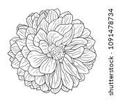 beautiful monochrome sketch ... | Shutterstock . vector #1091478734