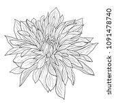 beautiful monochrome sketch ... | Shutterstock . vector #1091478740