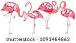 flamingo.tropical bird flamingos | Shutterstock .eps vector #1091484863