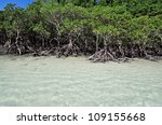 Mangrove Trees By The White...