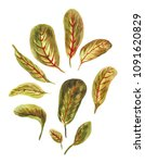 watercolor arrowroot's leaves... | Shutterstock . vector #1091620829