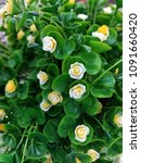 artificial flower image   Shutterstock . vector #1091660420