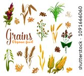 grain seed of cereal with ear... | Shutterstock .eps vector #1091666060