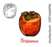persimmon fruit isolated sketch ... | Shutterstock .eps vector #1091666096