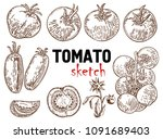 set of hand drawn tomato. great ... | Shutterstock .eps vector #1091689403