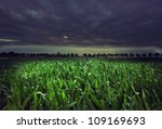 Mystical Green Meadow With...