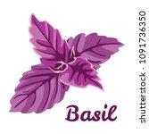 vector leaves of purple basil... | Shutterstock .eps vector #1091736350