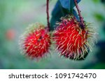 closeup rambutan on the... | Shutterstock . vector #1091742470