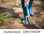 work in a garden   digging... | Shutterstock . vector #1091749259