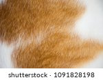 close up white and brown animal ... | Shutterstock . vector #1091828198