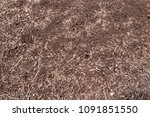the ant colony | Shutterstock . vector #1091851550