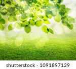 natural grass background with... | Shutterstock . vector #1091897129