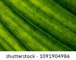 closeup background of sunlight... | Shutterstock . vector #1091904986