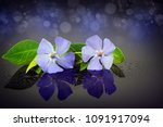 flower is on a glass and there ... | Shutterstock . vector #1091917094