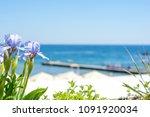 irises flowers on sea... | Shutterstock . vector #1091920034