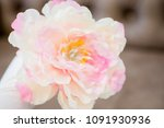 delicate and beautiful pink... | Shutterstock . vector #1091930936
