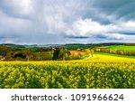 meadow yellow flowers landscape.... | Shutterstock . vector #1091966624