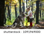 red riding hood with wolf in... | Shutterstock . vector #1091969000