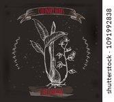 cardamom aka elettaria... | Shutterstock .eps vector #1091992838