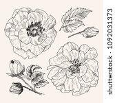 wild roses blossom branch... | Shutterstock .eps vector #1092031373