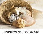 Sea Shells In A Basket Still...