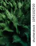 beautyful ferns leaves.... | Shutterstock . vector #1092102920