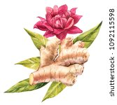 hand drawn ginger watercolor... | Shutterstock . vector #1092115598