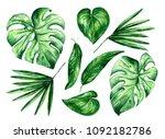 watercolor tropical floral... | Shutterstock . vector #1092182786