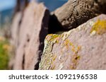 Small photo of A close up f the moss and allege growing on the side of the desert rocks in the utah heat.
