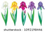 Vector Set With Outline Purple...
