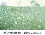 white flowers forest grass... | Shutterstock . vector #1092265139