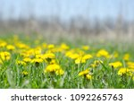 summertime yellow field of... | Shutterstock . vector #1092265763