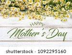 miniature daisies or bellium...   Shutterstock . vector #1092295160