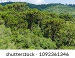 Panoramic View Of Araucaria...