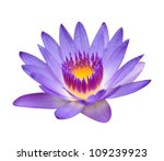Purple Lotus Isolated On White
