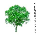 shrubs beautiful bush isolated  ... | Shutterstock . vector #1092407810