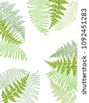 fern frond tropical leaves... | Shutterstock .eps vector #1092451283