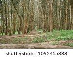 presidio san francisco... | Shutterstock . vector #1092455888