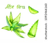 aloe vera plant and cut leaves  ... | Shutterstock . vector #1092466160