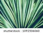 cactus aloe vera closeup.... | Shutterstock . vector #1092506060
