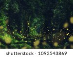 Fireflies In The Wild Forest....