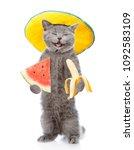 happy cat in summer hat holding ... | Shutterstock . vector #1092583109