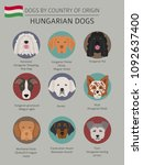 dogs by country of origin.... | Shutterstock .eps vector #1092637400