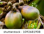 peradeniya  sri lanka   april...   Shutterstock . vector #1092681908